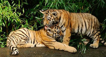 太原 • 动物园